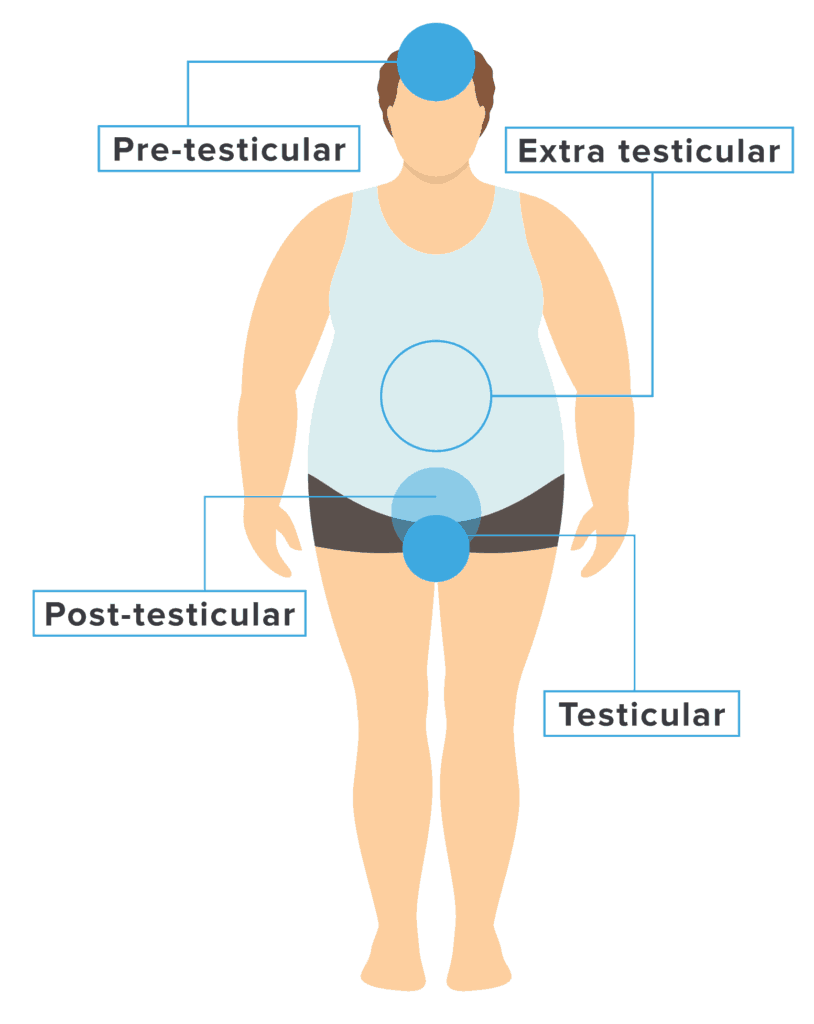 Potential causes of infertility can be organized into pre-testicular, intratesticular, post-testicular, and extra testicular causes